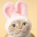 かわいい猫の写真とグッズが集結する「ねこがかわいいだけ展」開催へ