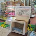 小林さんが製作したマスク回収箱のひとつは商店街のおもちゃ屋さんに置かれている