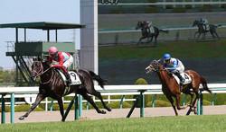 <阪神5R・新馬戦>人気に応えたコントレイル(左)(撮影・中村 与志隆)