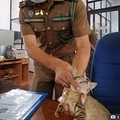 刑務官に捕獲された「運び屋」の猫(画像は『The Sun 2020年8月3日付「FELINE FREE Cat jailed after caught trying to smuggle heroin and SIM cards into Sri Lankan prison ESCAPES from his cell」(Credit: EPA)』のスクリーンショット)