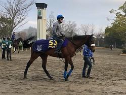 【有馬記念1週前】アーモンドアイ 現役最強馬の仕上がりは如何に