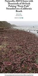 """ビーチに打ち上げられた大量の生物(画像は『Bay Nature 2019年12月10日付「Naturally, 2019 Closes with Thousands of 10-Inch Pulsing """"Penis Fish"""" Stranded on a California Beach」(Photo courtesy David Ford)』のスクリーンショット)"""