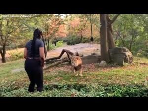 [画像] 【海外発!Breaking News】動物園で柵を乗り越え、ライオンの目の前でダンスする女性に非難殺到(米)<動画あり>