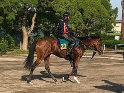 【注目新馬】クローストゥミー  稽古での動き良好