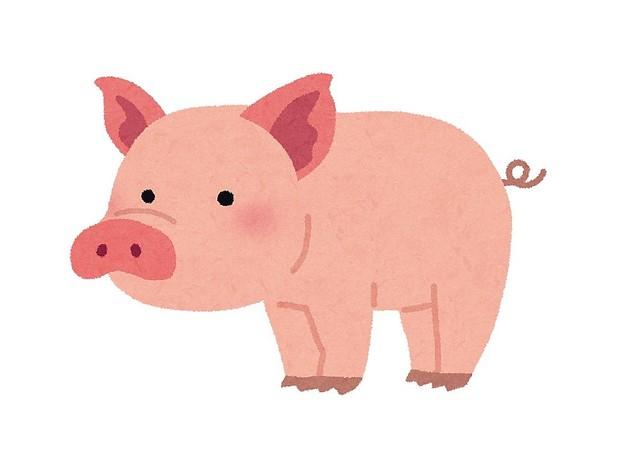 中国の「豚バンジー」に非難轟々 テレビ報道で「胸糞悪い」「映像見てらんない」...