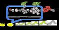 キンウワバトビコバチのライフサイクル。(画像:東京農工大学発表資料より)