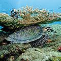 サンゴ礁の白化現象が世界中の海で蔓延 消滅に向かう危険性も