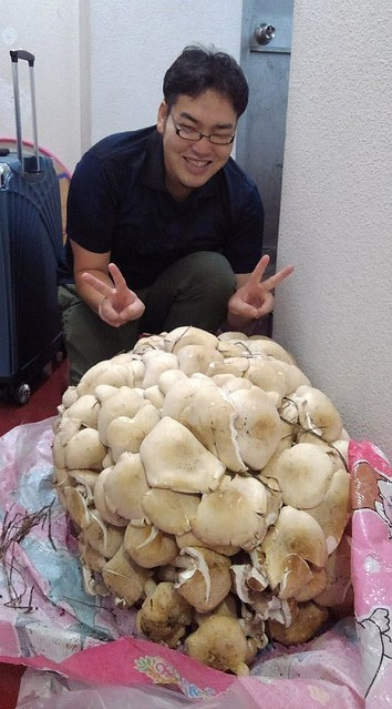 巨大キノコ「ニオウシメジ」を食べてみたレポがおいしそうだし見た目がすごい