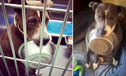 (L: Photo courtesy of Memphis Animal Services, R: Photo courtesy of oliverandhisbowl)