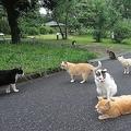 「捨て猫公園」で連続殺し疑惑「6日間で6匹が不審死」