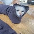 ズボンの中に入り込む猫ちゃんが「ナゾの生き物」などとTwitter上で話題になった(提供写真)