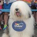 トッテナム新スポンサー、皮肉ジョークで物議!「彼らよりウチの犬のほうが…」