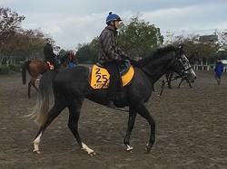 【富士S】ウインブライト 松岡「みっともない競馬にはならないと思う」