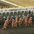ティラノサウルスが走る レース