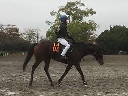 【アルテミスS】ミリオンドリームス 藤沢和師「レースがとても上手」