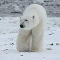 南極大陸の氷河はむしろ増加 温暖化をめぐる諸説の矛盾