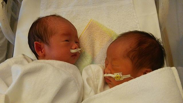 確率 双子 妊娠
