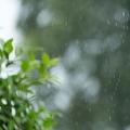 花粉症が雨でも症状に変化がない3つの原因 モーニングアタックなど