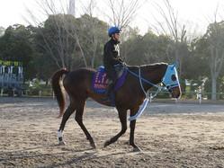 【阪神スプリングJ】オジュウチョウサン 石神「負けられない馬」