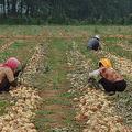 出稼ぎをする北朝鮮人が増加 都会と農村の圧倒的な経済格差が要因