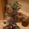 発芽した野菜や果物01