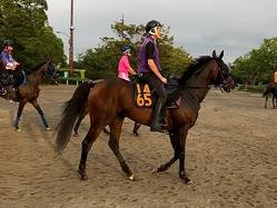 【紫苑S】レッドベルディエス 名手ルメールが騎乗で秋華賞の切符を狙う!