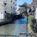 水量が増した源兵衛川(画像はさむ@urakutenismさん提供)