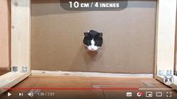 穴があったら入りたいんだけど……ネコはどのくらいの穴まで入ろうとするのかという検証動画