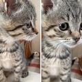 拾ってきた子猫を「18万8000円」と呼ぶおじいちゃん、話題に