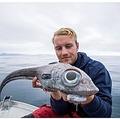 北欧「奇妙な魚」釣り上げられる