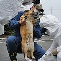 東日本大震災を機に、ペットとの災害対策が見直されるように(SORAアニマルシェルター提供)