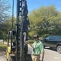 体長3.6メートルのワニを仕留めたハンター(画像は『Cordray's 2021年4月9日付Facebook「Ned McNeely brought in this 12' long 445 lb.  private land gator this morning!」』のスクリーンショット)
