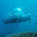 オーストラリアに世界初の相乗り潜水艦が登場 米ウーバーが航行