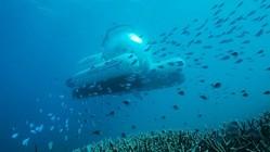 豪州で世界初の相乗り潜水艦、ウーバーが航行