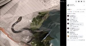 [画像] 【海外発!Breaking News】スーパーで買った袋入りレタスの中から生きた毒蛇が出現(豪)