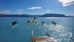 グリーンランド北西部で、海氷の上にたまった水の中を、犬ぞりを引いて進む犬たち。デンマーク気象研究所のステファン・オールセン氏撮影(2019年6月13日撮影)。(c)AFP=時事/AFPBB News
