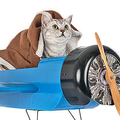 猫が原因で飛行機が緊急着陸 メンテナンス中に機内に迷い込んだ?