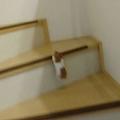 階段をのぼるハムスターたちの動画 「プロ」と「素人」の差が話題