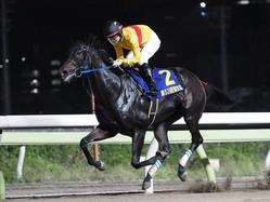 コパノキッキング(2019東京盃)