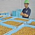 加工黒糖や輸入黒糖との競合で苦戦する黒糖(沖縄県伊平屋村で)