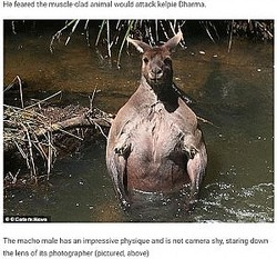 隆々とした筋肉を見せつけるように佇むカンガルー(画像は『BBC Gossip 2021年1月19日付「The terrifying moment a hulking kangaroo with muscular biceps and torso is spotted by dog walker」(Caters News)』のスクリーンショット)