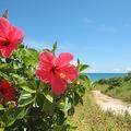 人であふれかえる沖縄の離島「南の島は安全」根拠ない情報で異常事態