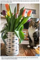 愛猫の最後の1枚となった写真(画像は『The Sun 2018年3月30日付「KILLED BY TULIPS Mum posts 'cute' pic of beloved cat posing next to tulips - only for flowers to kill pet 24 hours later」(IMAGE: MERCURY PRESS)』のスクリーンショット)