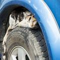 Large 191206 cat 01