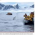 ツアー客が乗ったボートに向かってジャンプするペンギン(画像は『New York Post 2021年3月8日付「Fleeing penguin escapes killer whales in nail-biting video」(Expert Vagabond/Kennedy News)』のスクリーンショット)