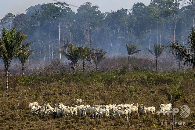 [画像] アマゾン森林火災、新たに数百件 ボリビアは支援受け入れ表明