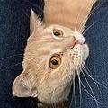 GUのジーンズを履くと猫にモテモテになる?うわさを実験してみた