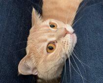 「GUジーンズをはくと、猫にモテモテ」の噂を実験。GU本社に真偽を聞いてみた