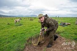 アイルランド北部のウサギの営巣地で、ウサギ捕りをするスティーブン・マクゴニガルさん(2020年8月18日撮影)。(c)Paul Faith / AFP