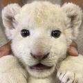 地震被害の北海道 福島県の動物園がTwitterで「癒やしの支援」